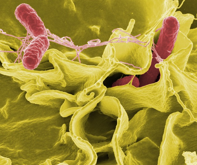 Bacteria 67659 640